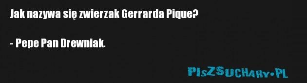 Jak nazywa się zwierzak Gerrarda Pique?  - Pepe Pan Drewniak.