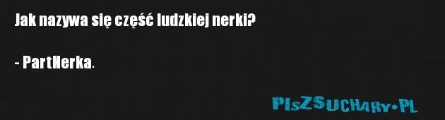 Jak nazywa się część ludzkiej nerki?  - PartNerka.