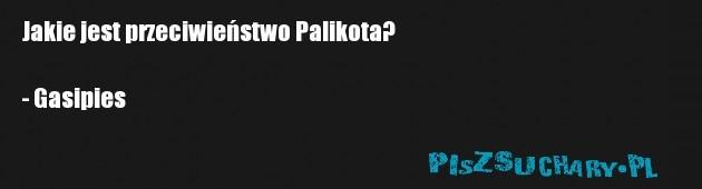 Jakie jest przeciwieństwo Palikota?  - Gasipies