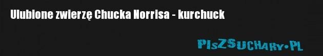 Ulubione zwierzę Chucka Norrisa - kurchuck