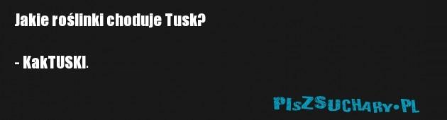 Jakie roślinki choduje Tusk?  - KakTUSKI.